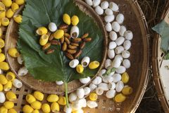 Silkworms Royalty Free Stock Images