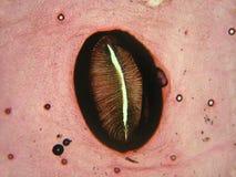 silkwormspiracle Royaltyfri Bild