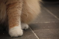 Silky Paws Stock Image
