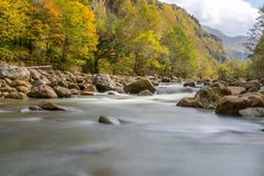 A silky stream with autumn tree on the shore royalty free stock photos