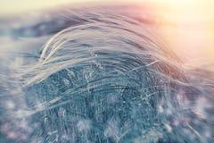 Silky trawa - miękkości wysoka trawa w zimie Fotografia Royalty Free