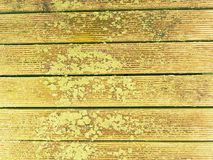 Wet hard wood board with weathering resists surface. Wooden beach pier floor. The sill wet hard wood board with weathering resists surface. Wooden floor of beach Royalty Free Stock Images