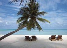 Silla de cubierta debajo de una palmera en una playa tropical Imágenes de archivo libres de regalías