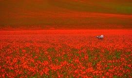 Silla de jardín en campos rojos de la amapola fotografía de archivo libre de regalías