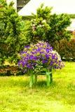 Silla de la decoración del jardín con las flores púrpuras y blancas Imagen de archivo libre de regalías