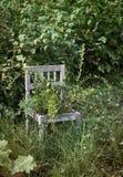 Silla de madera vieja en jardín salvaje Imagenes de archivo