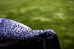 Silla de montar con rocío Foto de archivo