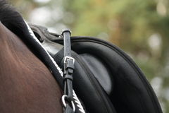 Silla de montar negra en caballo negro Fotografía de archivo libre de regalías