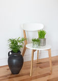 Silla elegante con las plantas verdes Imágenes de archivo libres de regalías