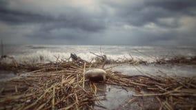 Silla en la orilla del mar Mediterráneo imagen de archivo
