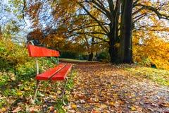 Silla roja con el árbol de oro y hojas en otoño Imagen de archivo libre de regalías