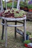 Silla y planta suculenta Imagenes de archivo