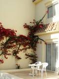 Sillas blancas y flores rojas Imágenes de archivo libres de regalías