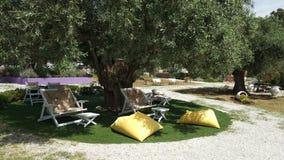 Sillas que gandulean debajo de un olivo viejo, islas de Grecia fotografía de archivo