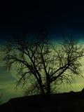 Sillhouette Immagini Stock Libere da Diritti