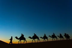 Sillhouette of camel caravan going through the desert at sunset Stock Photography