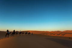 Sillhouette of camel caravan going through the desert at sunset Royalty Free Stock Photography