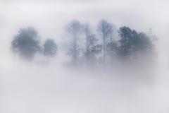 Sillhouette de árboles en niebla en bosque Imagenes de archivo