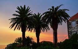Sillhouette de las palmeras imagen de archivo libre de regalías