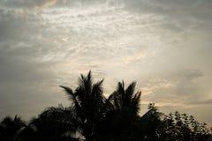 Sillhouette träd Arkivfoto