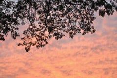 Sillhouetteboom met oranje hemel Stock Afbeeldingen
