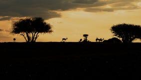 Sillhoute dell'impala Immagini Stock