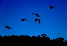 Sillhoutte di volata degli uccelli Fotografia Stock