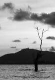 Sillohuette阴影菩萨图象、树和山 免版税库存图片