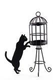 Sillouette av en katt och en fågelbur royaltyfria foton