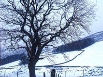 Sillouette di un albero contro un fondo di neve Fotografia Stock Libera da Diritti