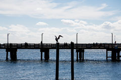 Sillouette of Pelican and Pier Stock Images