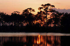 Sillouette of pine trees. Silhouette of pine trees and reflection in a river at sunset Stock Image