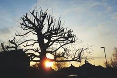 Sillouette van boom bij zonsopgang Stock Afbeelding