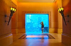 Sillouette van de vrouw die beeld in groot aquarium nemen stock fotografie