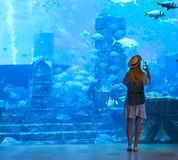 Sillouette of the woman taking picture in large aquarium. In Dubai royalty free stock images