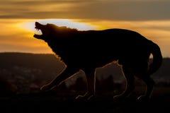 Sillouhete do cão do descascamento Fotografia de Stock