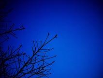 Silluate drzewo z zmrokiem - niebieskie niebo Obrazy Stock
