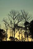 Silluate träd på himlen Royaltyfria Bilder