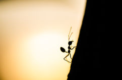 Silluette Red ant in green nature Royalty Free Stock Images