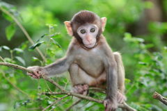Silly albino macaque in Hong Kong Stock Photography