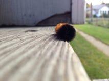 Silly caterpillar stock photos