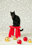 Silly christmas cat Royalty Free Stock Photos