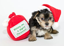 Silly Christmas Puppy Stock Photos