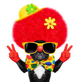 Silly clown dog royalty free stock photography