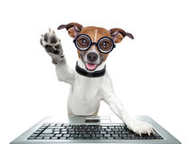 Silly computer dog. High five with paw stock photos