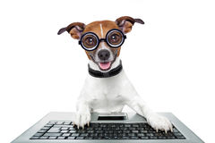 Silly computer dog. Looking directly at you Stock Photo