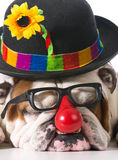 Silly dog Royalty Free Stock Image