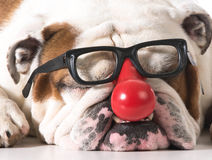 Silly dog Royalty Free Stock Photography