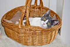 Silly Kitten Stock Photography