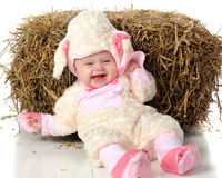 Silly Little Lamb Stock Images